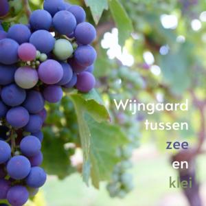 wijngaard noordwijk